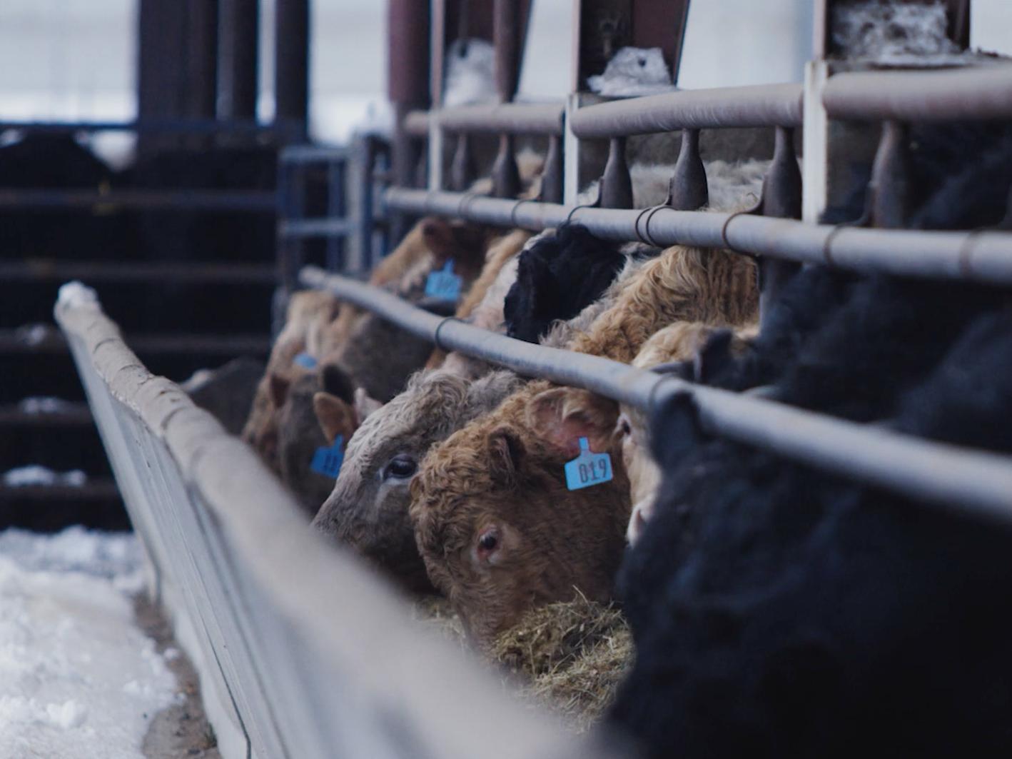 Kerkhoff Cattle Company